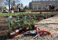 20170405-AMS-LSC-2015 (USDAgov) Tags: usda departmentofagriculture usdepartmentofagriculture peoplesgarden nationalmall washington dc planting seed sprout tools soil garden transplant plant align spring coolweather
