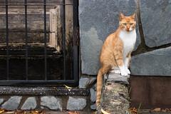 365-100 (Letua) Tags: 7dwf gato mascota animal pet cat orange naranja
