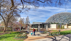 Missouri Botanical Garden (ioensis) Tags: missouri botanical garden saint st louis mo brookings interpretive center temperate house climatron jdl ioensis april 2017 02612007067tmf1b©johnlangholz2017