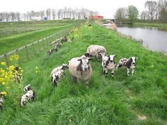 IMG_8398 (kassandrus) Tags: hiking wandelen netherlands nederland struinenenvorsen oude hollandse waterlinie