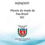Plantio da muda de Pau-Brasil