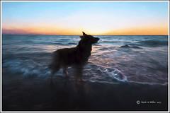 Lake Michigan Memories (GLASman1) Tags: 20170421 star lakemichigan sunset impression empire belgiantervuren nikond750 dog