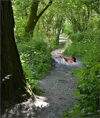 Water Hazard (swong95765) Tags: swim path forest man hole water splash stroke traverse choices obstacle trail sinkhole