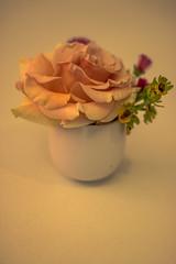 (Jef ALTERO) Tags: fleur rose bouquet