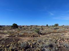 Needles District at Canyonlands NP in Utah (Jeff Hollett in Vancouver, WA) Tags: needlesdistrict canyonlandsnationalpark utah landscape west southwest desert cactusplants cactus