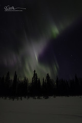 _64A1691 (Ed Boudreau) Tags: alaska northernlights auroraborealis nightphotography nightsky stars aurora winter winterscene winterscape landscape alaskalandscape landscapephotography auroratrapperscreek petersvillerd auroracolors