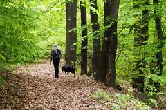 Majális az erdőben / May 1st in the forest (debreczeniemoke) Tags: tavasz spring erdő forest séta walk kutya dog frakk május may olympusem5