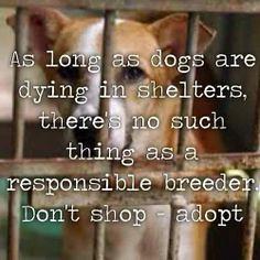 DONT SHOP ADOPT (dflmanagement) Tags: dog adopt rescue animal pet breeder cat