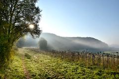 Dollnstein 2 (Pixelkids) Tags: dollnstein bayern altmühltal deutschland landschaft sonnenblumen nebel morgennebel feld