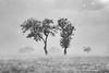 The Rain (Irene Becker) Tags: africa imagesofnigeria kadunastate landscape nigeria nigerianimages nigerianphotos northnigeria westafrica northernnigeria kaduna blackandwhite monochrome