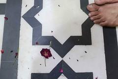 The Doomed Indian Rose (Mayank Austen Soofi) Tags: delhi walla the doomed indian rose feet flower
