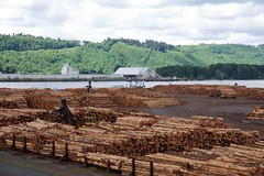 Port of Longview log export (Sam Beebe, Ecotrust) Tags: usa us washington log forestry timber logs longview shipping weyerhaeuser export rawlogexport portoflongview