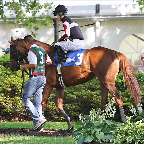 Tell a Great Story w/Forest Boyce up heads out for the Go For Wand Stakes @ Delaware Park 6-15-13...they went on to win.