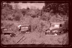 old friends to the end (David Sebben) Tags: old morning sun ford abandoned rural truck decay grain iowa rusted studebaker