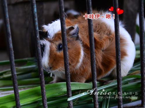 宜農牧場_033.jpg