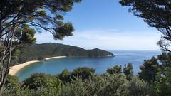 Abel Tasman NP-Totaranui to Separation Point (scrumpy 10) Tags: ocean newzealand beach nature animals landscape nikon natur seal aotearoa mothernature neuseeland landschaften d800 totaranui separationpoint jacqualine ozeanien newzealandnature scrumpy10