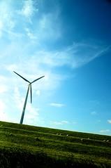 the wind blows | Nikon D90 (lomostream) Tags: sky holiday holland netherlands clouds nikon sheep wind gras nikkor windpower niederlande greeb d90 nikond90 nikongraphy lomostream