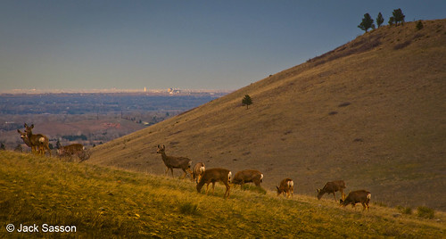 Photo - Evening deer - along Doudy Draw trail