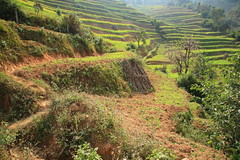 Path in a field (AdjaFong) Tags: nepal field terraces agriculture panauti