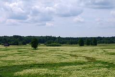 Tipu heinamaa (Jaan Keinaste) Tags: estonia pentax eesti k7 soomaa heinamaa viljandimaa soomaarahvuspark pentaxk7 kpuvald tipukla