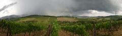 Weingarten mit Regenbogen