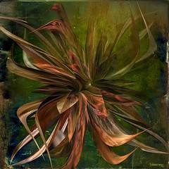 leviathan (bloorose-thanks 4 all the faves!!) Tags: art digital 3d render fractal incendia