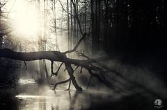 Collapse (warmianaturalnie) Tags: mist tree nature water silhouette fog sunrise river landscape pasłęka