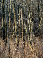 Trees @ Lincoln Brick Park (joeldinda) Tags: park trees brick michigan grand cybershot gone ledge lincoln joeldinda