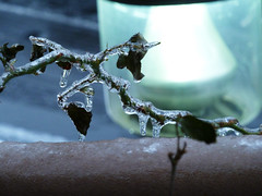 Ice storm, Dec. 8th 2013 (angelynx_prime) Tags: trees winter ice weather maryland bethesda