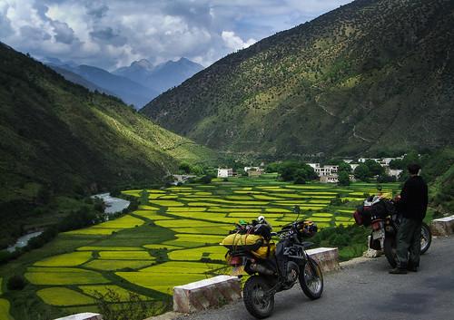 Canola fields, Motorbike Trip Tibet by Matt Ming, on Flickr