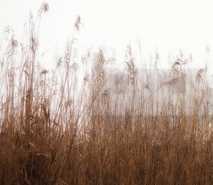 ghostly house (wortenoggle) Tags: fog river reeds maryland shore ghostly eastern apparition talbot
