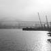 Foggy day on the Fraser River 2014-01-26 043-LR