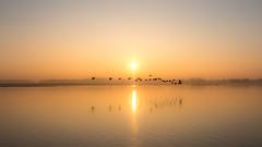 WINTER SUNRISE (CUMBUGO) Tags: winter light sun holland reflection water birds yellow fog sunrise river nikon mood netherland nikkor f28 biesbosch d800 1424mm d800e vision:sunset=0968 vision:mountain=0611 vision:sky=099 vision:outdoor=089 vision:clouds=0984 vision:ocean=0573