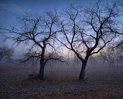 Trees in the fog-Challenge image (PT Photo) Tags: trees fog colorado stitched riversidepark simga1020mm vertorama ptphoto redmatrix