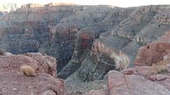 DSC06816 (jorgehevia2003) Tags: 2009 arizonausa viajelasvegas2013 grancanonarizona