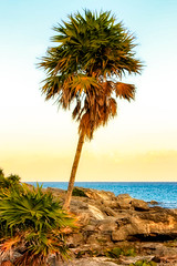 Palm Tree at Sunset (Don Smith Photo) Tags: sunset mexico palmtree