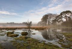 Morning Tranquility (~g@ry~ (clevedon-clarks)) Tags: morning mist tree ice fog reflections nikon day tranquility somerset morningmist garyclark mendiphills nikkorafs1635mmf4gedv