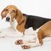 FCAS Dogs - Jessie