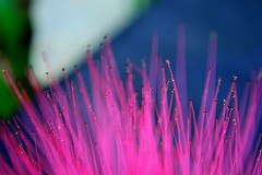 Pink hearts (Bhupesh Ra!) Tags: pink flowers red favorite abstract macro art glass colors beads nikon colorful incredible hue catchy soe macroshot macrofilter d5200 nikonflickraward blinkagain nikond5200