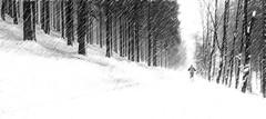 Keep on tracking (dorrisd/ unable to comment) Tags: img1169 crosscountryskiing skier loipes loipe tracks trees forest sauerland hochsauerland rucksack langlaufen bos winter wintry snowing misty digitalart landscape sport outdoors german germany duitsland duits nature natuurgebied hoherknochenloipe westfeldohlenbach mienekeandewegvanrijn dorrisd canoneos6d canonef24105mmf4lisusm texturing buitensport activity recreational poles langlaufer neige schnee