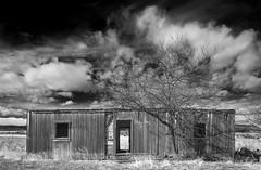 once was home / B&W version (eDDie_TK) Tags: colorado co larimercountyco larimercounty weldcountyco weldcounty lovelandco berthoudco johnstownco abandoned railroadboxcar boxcar railroads blackandwhite bw