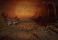 Prowling at Sundown (brian_stoddart) Tags: animals trains coyotes trees sundown car death valley