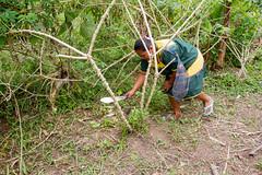 Harvesting Yuca IMG_9912 (grebberg) Tags: community sionalodge rainforest puertobolivar sionaindiancommunity cuyabenoreserve amazon ecuador january 2017 cuyabenoriver yuca cassava manihotesculenta