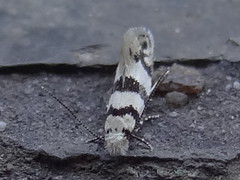 DSC00162 (familiapratta) Tags: sony dschx100v hx100v iso100 natureza inseto insetos nature insect insects