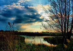 Evening by the River Ant (tina negus) Tags: ludham bridge evening river ant tree norfolk broads landscape