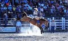 P3110236 (David W. Burrows) Tags: cowboys cowgirls horses cattle bullriding saddlebronc cowboy boots ranch florida ranching children girls boys hats clown bullfighters bullfighting