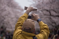 _DSC0349 (kymarto) Tags: bokeh bokehphotography bokehlicious dof depthoffield japan oldens vintagelens sony sonynex7 sonyphotography hanami park cherryblossoms sakura velostigmat wollensak