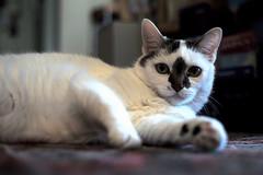 L1002654_p_t_g (thebiblioholic) Tags: pico cat 365 tumblr