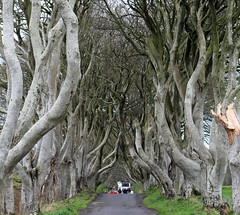 The Dark Hedges (Game of Thrones) (Dave Russell (700k views)) Tags: kings road game thrones series northern ireland beech trees film filming location landscape nature bregagh armoy tourism travel