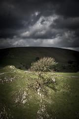 Moody tree scene (Keartona) Tags: tree hillside steep moody moodysky darksky limestone scenery earlsterndale derbyshire england peakdistrict sunlight dramatic processing dark sky bare march